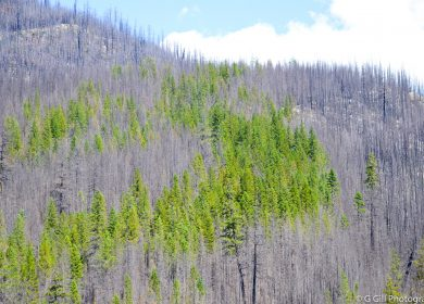 Elaho Main FSR: After 2015 Wildfire