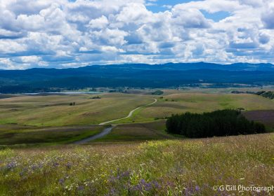 Grasslands and Rolling Hills: Quilchena to Douglas lake